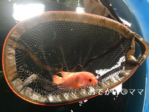 釣って見つけるぼうけんの国の魚