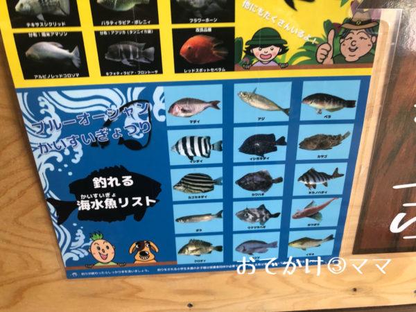 釣って見つけるぼうけんの国で釣れる魚一覧表