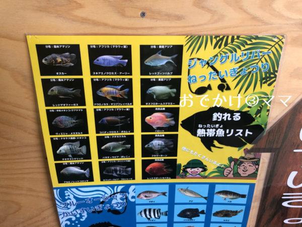 釣って見つけるぼうけんの国の釣れる魚一覧