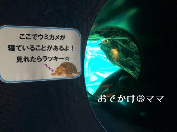 箱根園水族館のうみがめのお昼寝