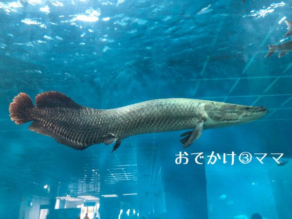 箱根園水族館のお魚