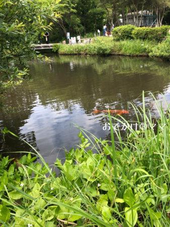 箱根園水族館の中庭の池