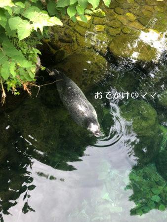 箱根園水族館のあざらし
